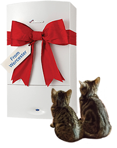 Enter our cat competition to win a boiler